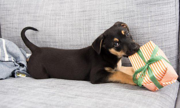 Mascotas más protegidas gracias al Internet de las cosas